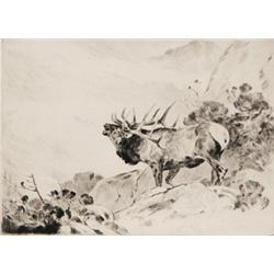 Rungius, Carl - The Challenge (1869-1959)