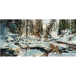 Coheleach, Guy - Yellowstone Puma (b. 1933)