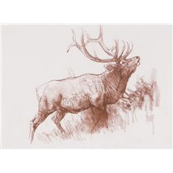 Kuhn, Bob - Elk (1920-2007)