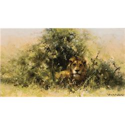 Shepherd, David - Lion (b. 1931)