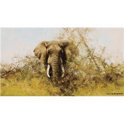 Shepherd, David - Elephant (b. 1931)