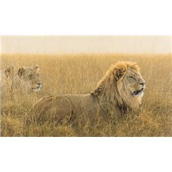 Bateman, Robert - Lions in the Grass (b. 1930)