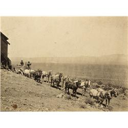 CA - Mohave,c1905 - Mojave Mining Team Photograph