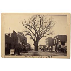 CO - Pueblo County,Early 1880s - Pueblo's Big Tree Photograph