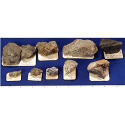 Tungsten Ore Specimens - Western States