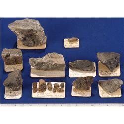 CO - Boulder,Boulder County - Gold and Silver, Rare Species - Boulder, Colorado