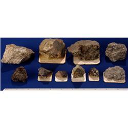 CO - Silver, Lead Species - Colorado