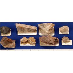 NV - Rawhide,Mineral County - Gold Specimens -  Rawhide, Nevada