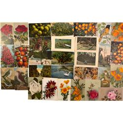 CA - Postcards from Nature - Gil Schmidtmann Collection